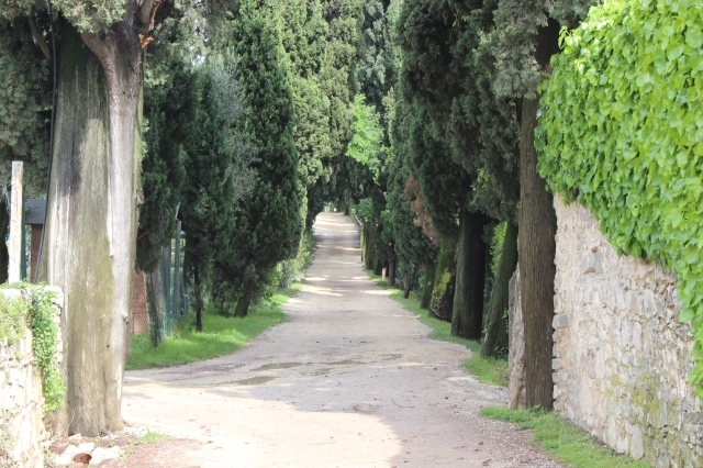 The row of Cyprus trees leading up to Lake Garda
